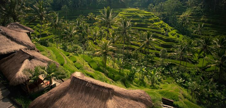 Rice terraces decorate the hills of Tegalalang, creating a flawless scene of unmatched beauty.