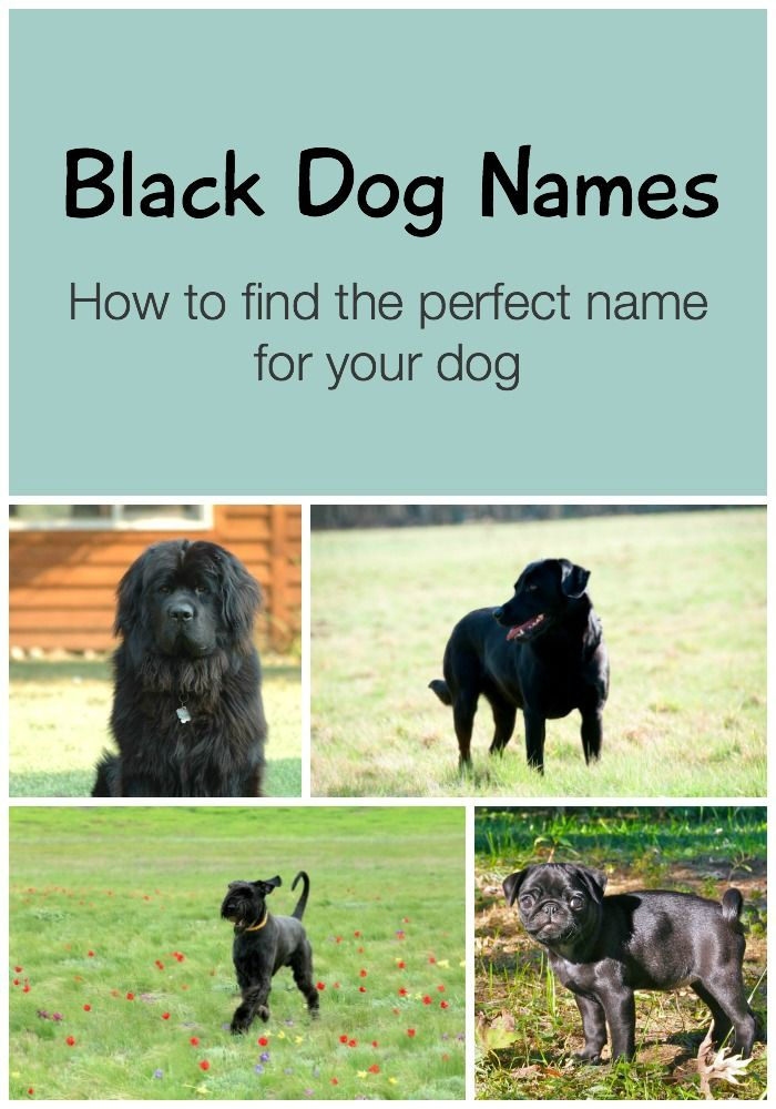 Black Dog Names The Ultimate List [150+ Awesome Names