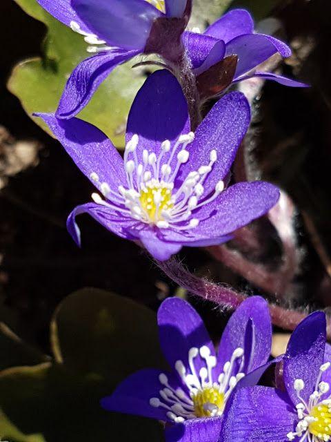 Takalo-Roppolan puutarha- ja mansikkatila
