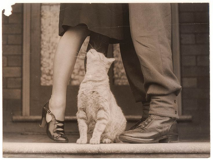 https://flic.kr/p/5THmER | Soldier's goodbye & Bobbie the cat, Sydney, ca. 1939-ca. 1945 / by Sam Hood | Format: Photoprint  Print this image on a product via our #madewithslnsw store on Redbubble.    Notes: Find more detailed information about this photograph: acms.sl.nsw.gov.au/item/itemDetailPaged.aspx?itemID=153383  Search for more great images in the State Library's collections: acms.sl.nsw.gov.au/search/SimpleSearch.aspx   From the collection of the State Library of New South Wales…