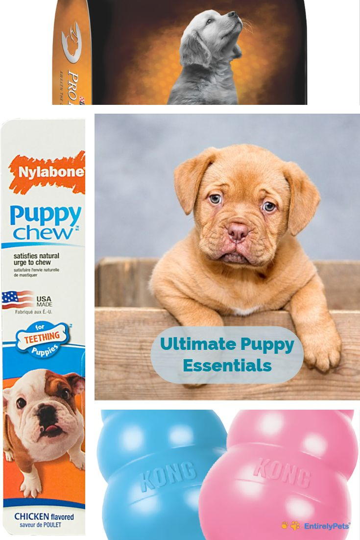 Do You Have A New Puppy In Your Life Check Out These Must Have Items From Entirelypets And Get The Best For You New Fur Mini Puppies Puppy Teething Multi Pet