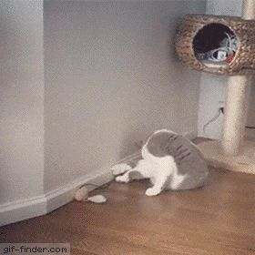 Brutal cat fight | Gif Finder – Find and Share funny animated gifs