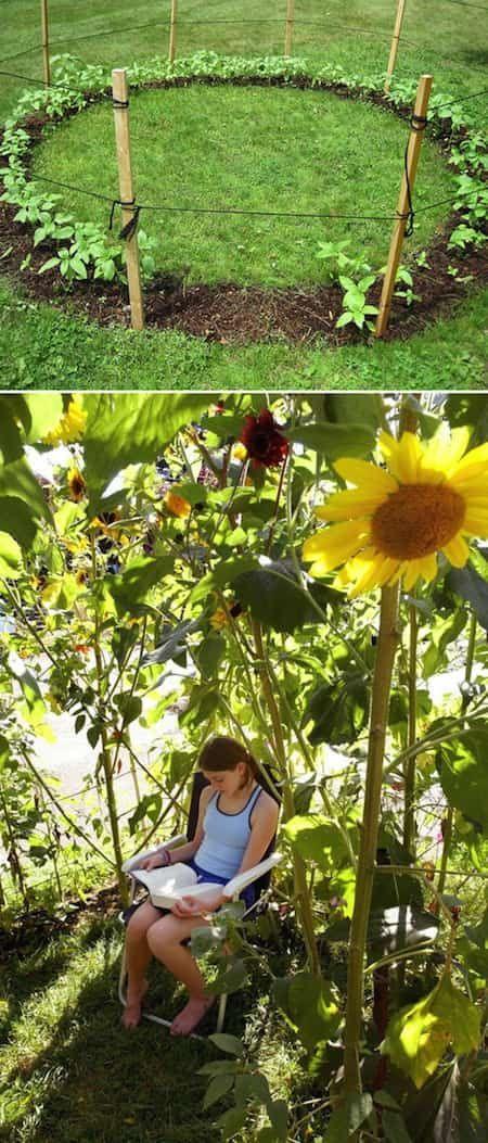 une cabane faite avec des tournesols : à faire avec les enfants pour créer un abri fleuri en été.