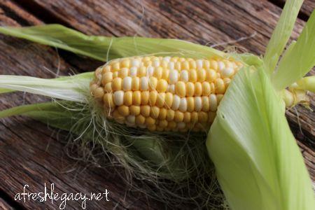 Vegetable Growing Tips. Things I have learned growing vegetables in my backyard