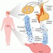 Overcoming hypothalamic amenorrhea