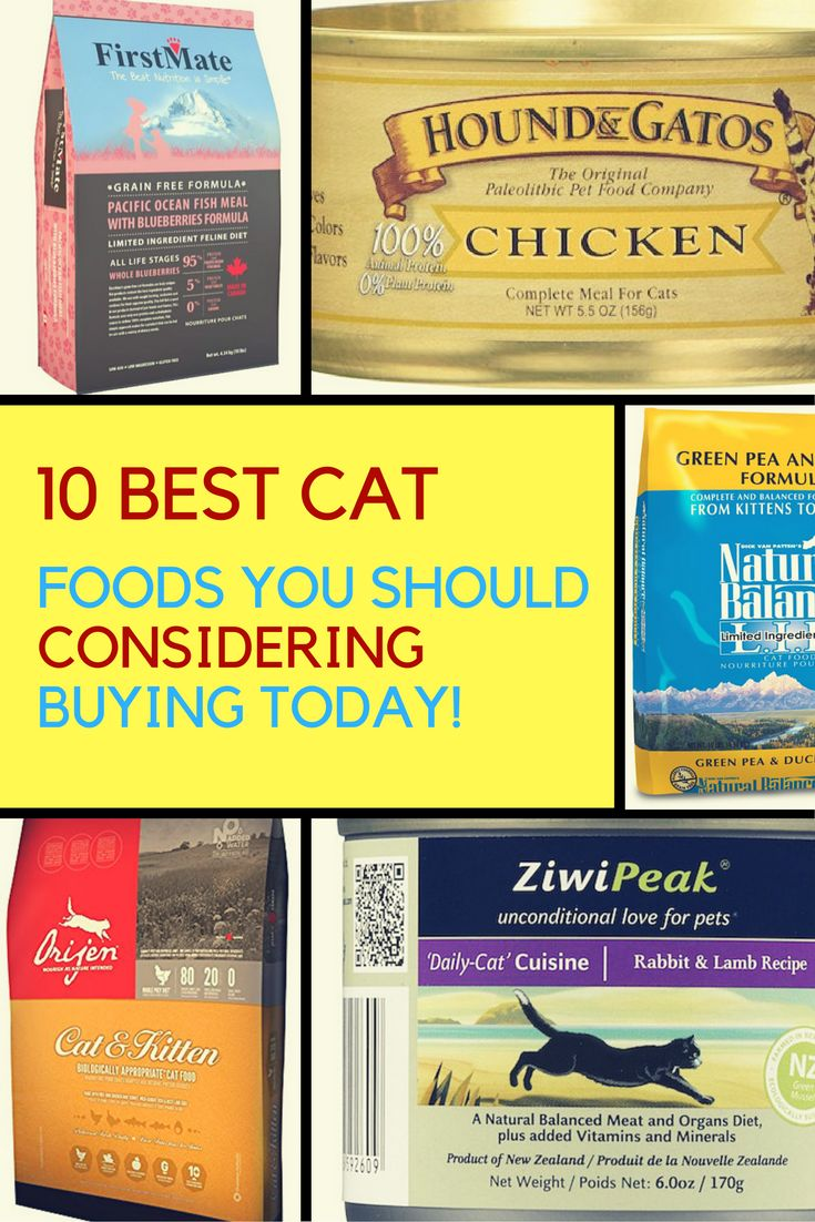 Are you looking for quality and healthy food for your cat? We've reviewed the top 10 best cat foods in 2016 so that you cat can start eating healthier today. | Ideahacks.com