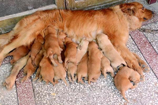 Adorable pictures of momma dogs and their pups! Click on the picture to get to the link.
