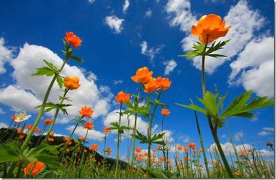 Deixe a vida florescer  em você!