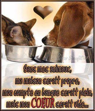Sans mes animaux, ma maison serait propre, mon compte en banque serait plein, mais mon cœur serait vide.
