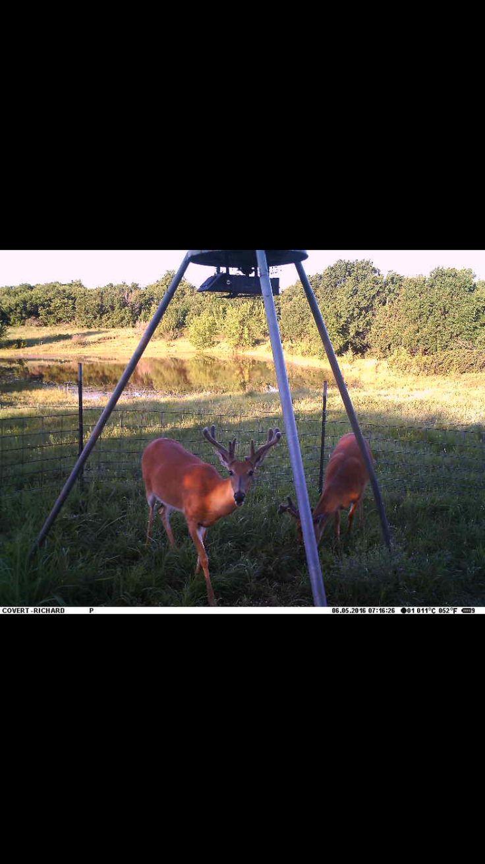 Louisiana Deer Map%0A Oklahoma  Hunting