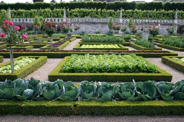 Такой вот красивый огород...