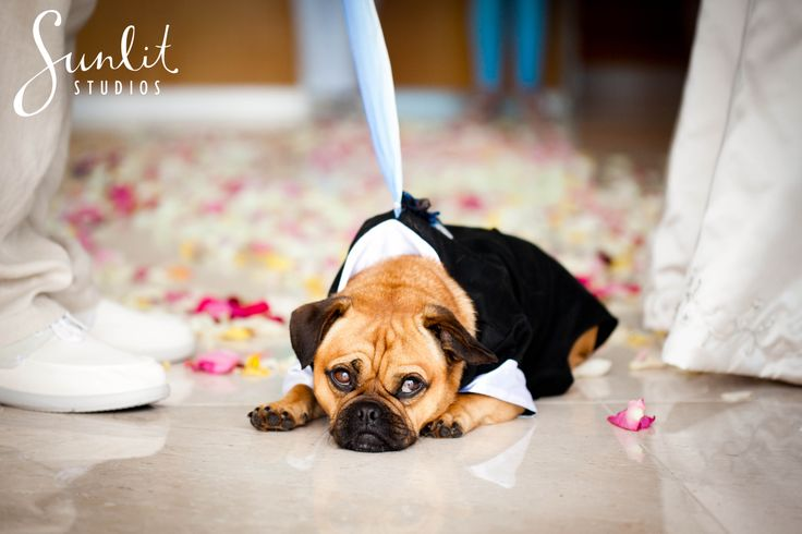 Include your pet at your wedding! This little pug donned the cutest little tuxedo!