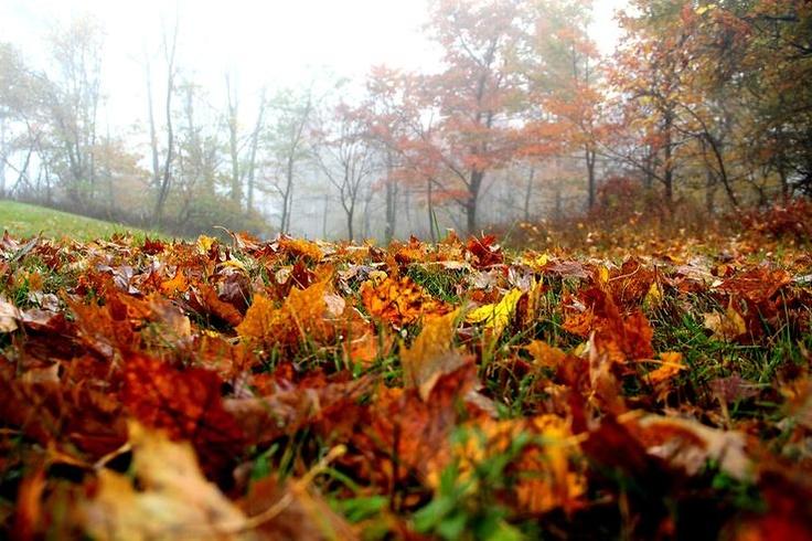 Falling Leaves by angelo foggetta @ http://adoroletuefoto.it