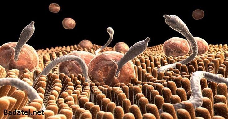 Trápia vás akútne či chronické ochorenia? Príčinou môžu byť iné organizmy, ktoré parazitujú vo vašich črevách. Takto sa ich zbavíte!