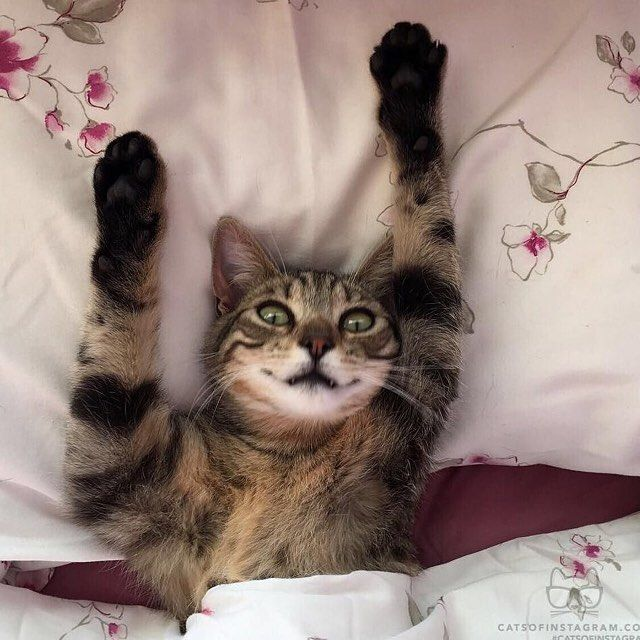Good morning! #morning #bestfriends #catstagram #gato #cat #instapets #catsofinstagram #catlover #instacats #happy #catlife #textgram #sexycurve #kitty #pose #lifestyle