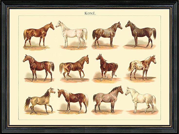 Obraz 12 starých plemen koní.