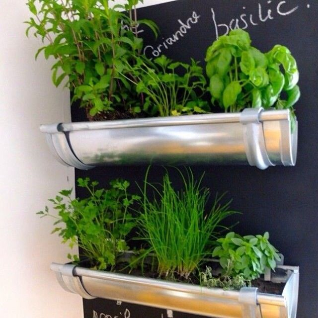 Potted herbs with chalkboard backdrop