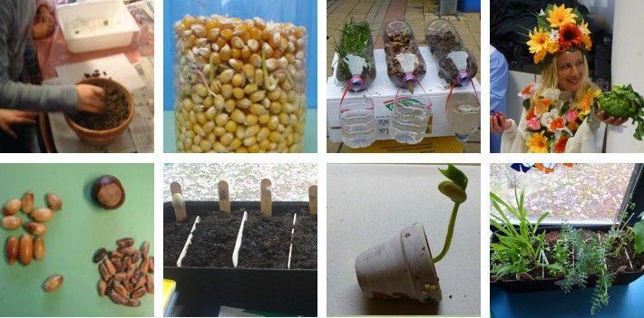 Esperimenti con le piante
