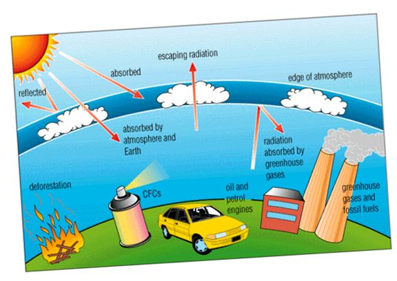 species depletion essay Learn about the human health and environmental effects of ozone layer depletion.