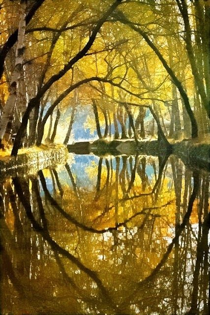182 best Tunnels of Trees images on Pinterest   Forests ...