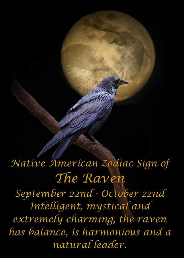 The Native American Zodiac Sign Of The Raven By Stephanie Laird Soul Healing Pinterest Native American Zodiac Native American Zodiac Signs And