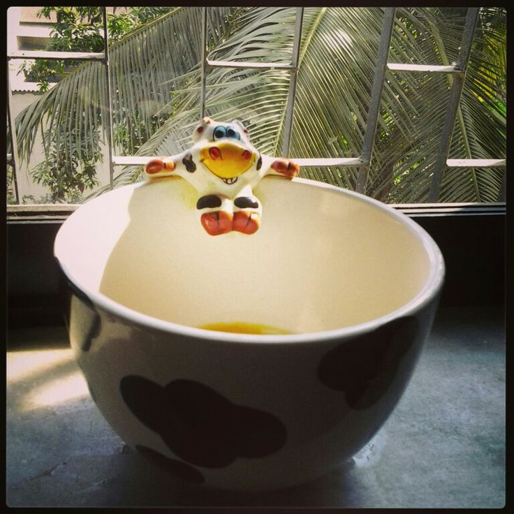 #bowl #sunlight #happy #cow #morning #light