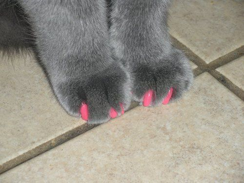 What The @ Soft Cleats For Kitties? Find This Pin And More On Ideas To Keep  Cats From Scratching Furniture ...