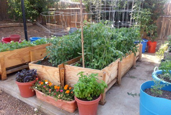 Zucchini in containers uses tomato cages on the zucchini for Container gardening