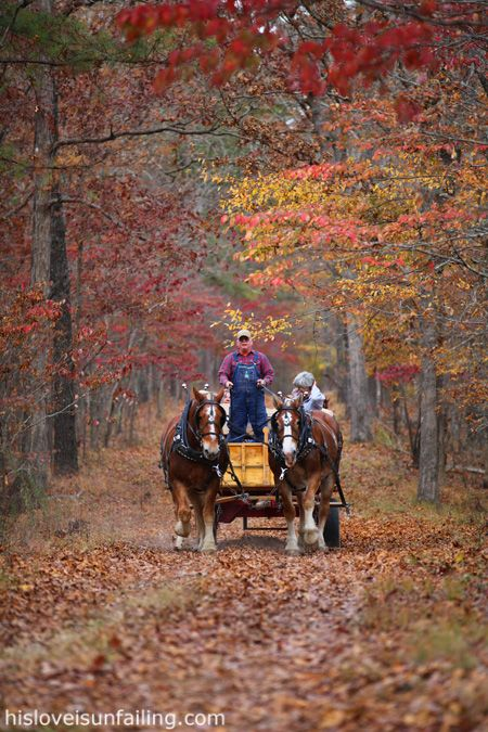 Time for a hay ride....advantage of living in rural area - horses for a hayride are the best!