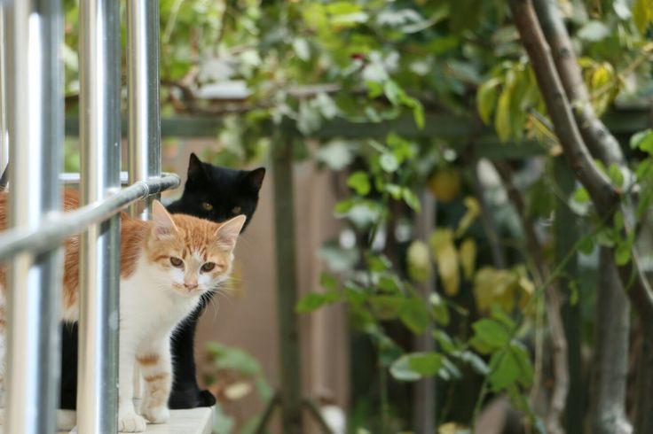 cat brotherhood