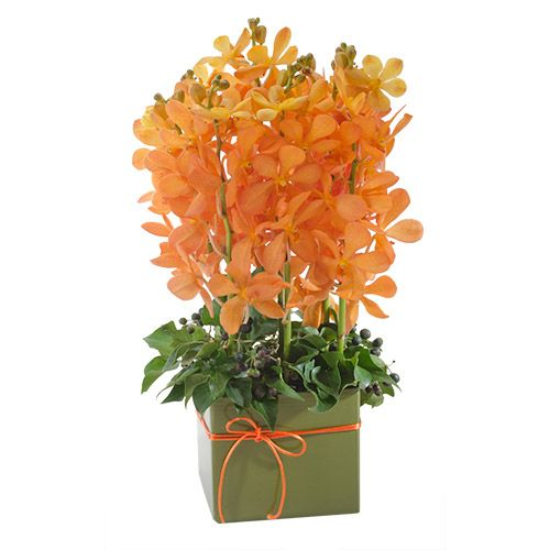 """Buy """"Sunset"""" for $70.00. These Sweet, Orange Orchids Are The Height Of Sophistication!beautifully Displayed And Expertly Designed, This Stunning Arrangement Is Sure To Delight!"""