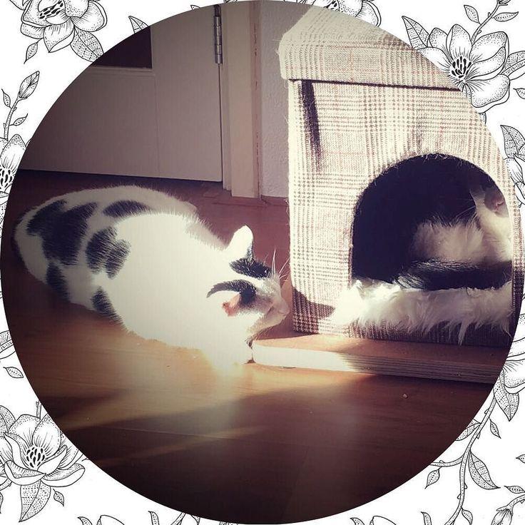 Kindertjes in de zon - net alsof ze aan het praten zijn  #love #lovely #cat #cats