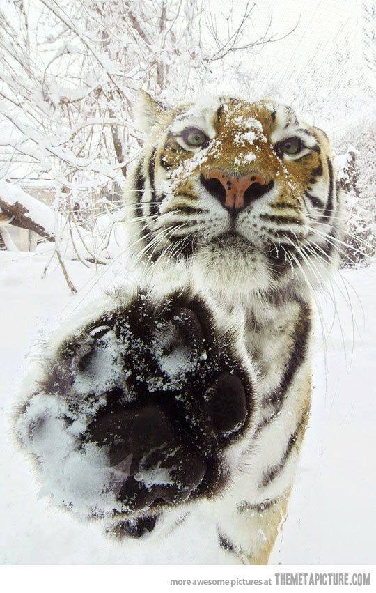 You there, high five…