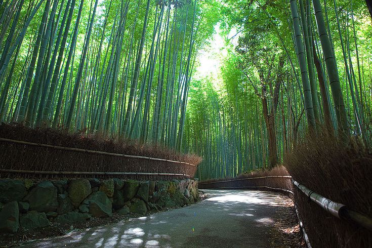 Sagano Bamboo forest, Mount Arashiyama, Kyoto, Japan. May 17, 2009 // photo by Casey Yee from Vancouver, BC, Canada //  (look at this, someone took photos here on the same day I got my kakau)