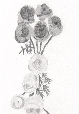 本日の一枚。2017/4/25モノクロです。ラナンキュラスの花。