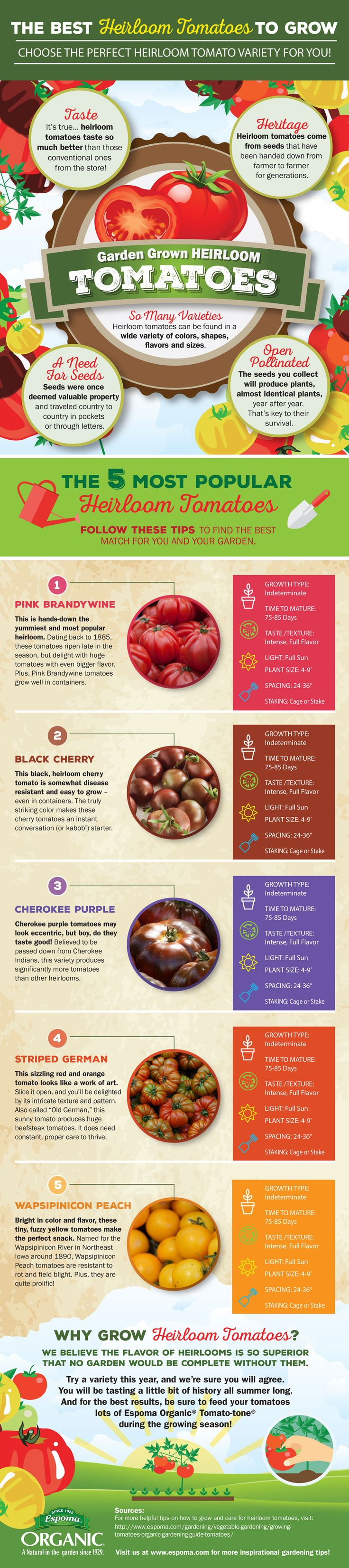 The Best Heirloom Tomatoes to Grow