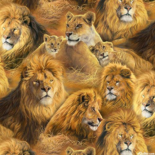 Animal Adventure - Among the Lions - Quilt Fabrics from ...