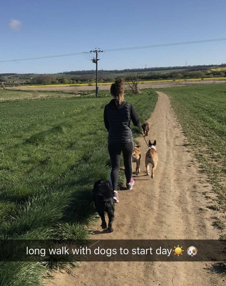 Morning walks with English bull terriers and cocker spaniels 🐶🐾