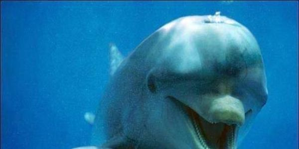 petition: Shut Down Illegal Dolphin Swim Facility in The Bahamas