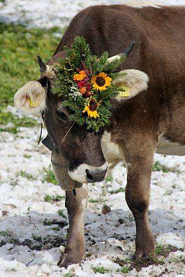 Prättigauer Alp Spektakel - Alpine descent festival in Seewis