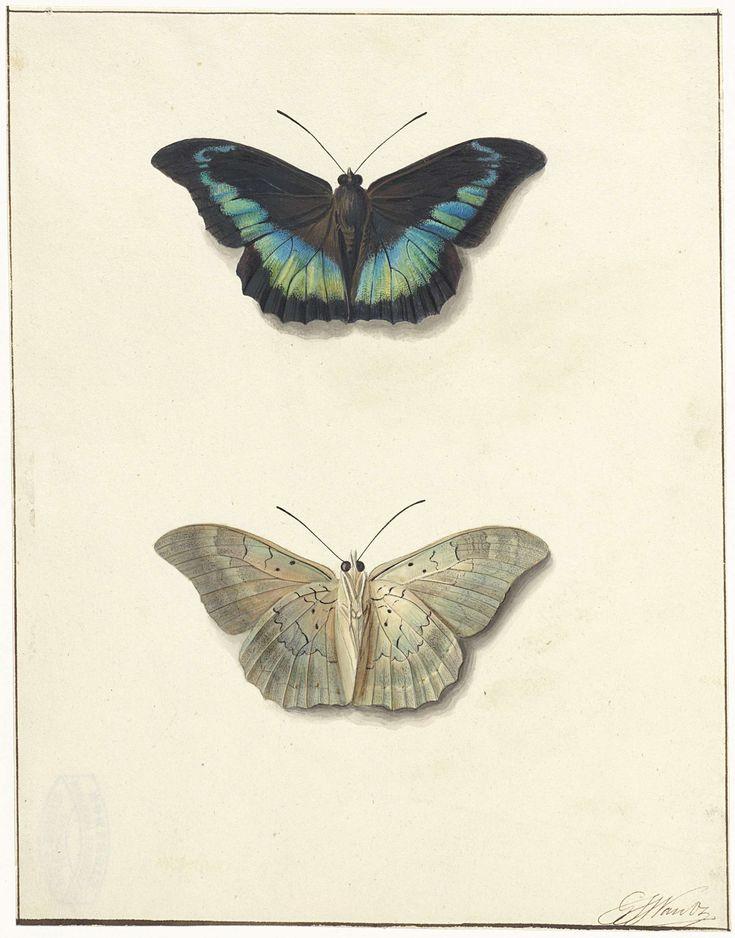 Boven- en onderaanzicht van een vlinder, Georgius Jacobus Johannes van Os, 1792 - 1861