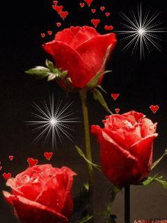 Hermosas Imagenes De flores Rosas Rojas Con movImiento | Imagenes De Flores Para Colorear