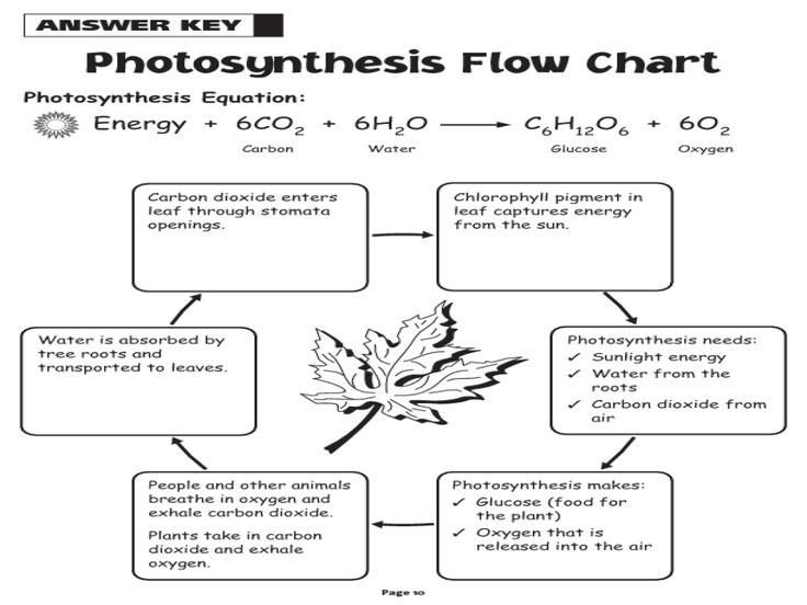 63 best Photosynthesis + Cellular respiration images on Pinterest ...