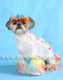 I thought of Chloe Nichole.   creative dog grooming school in Thailand...... สอน,เรียนตัดขนสุนัข โรงเรียนภายใต้การควบคุมของกระทรวงศึกษาธิการ