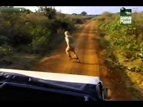 Steve Irwin Crocodile Hunter - Island of Snakes