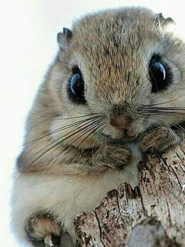 Pin De Solanyi Esteban En My Precious Animals 3 Animales Adorables Imagenes De Animales Tiernos Animales Salvajes