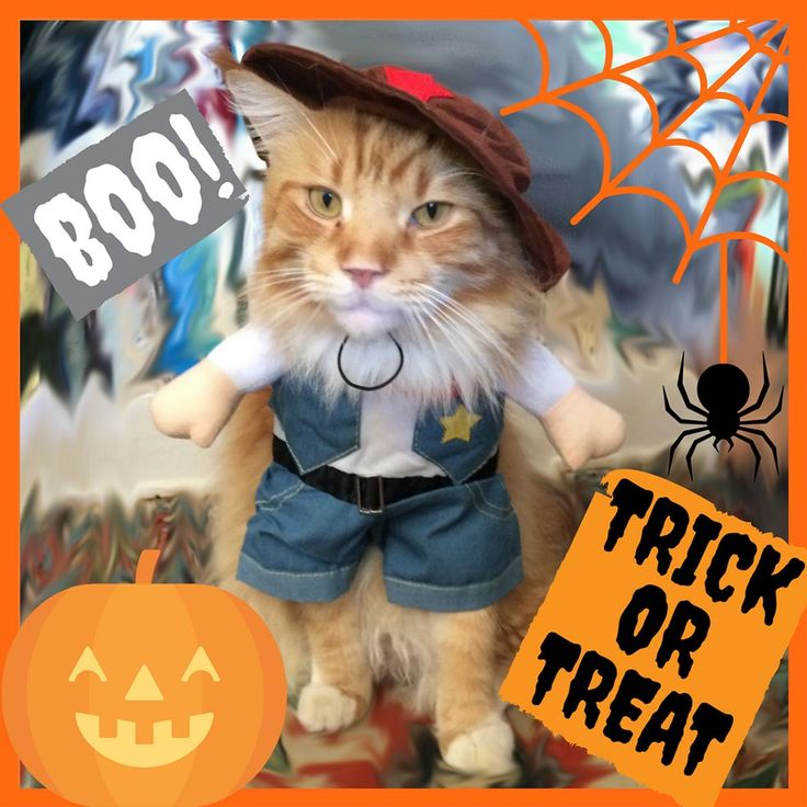 Halloween in America is WAY different than Halloween back in England…First, there is no Bonfire Night (which I'm actually happy about because of those horrible fireworks)…and second EVERYONE dresses up here in LA and it isn't just ghouls and ghost #Halloween #Pussycat #Monty #MontysFurryFriends