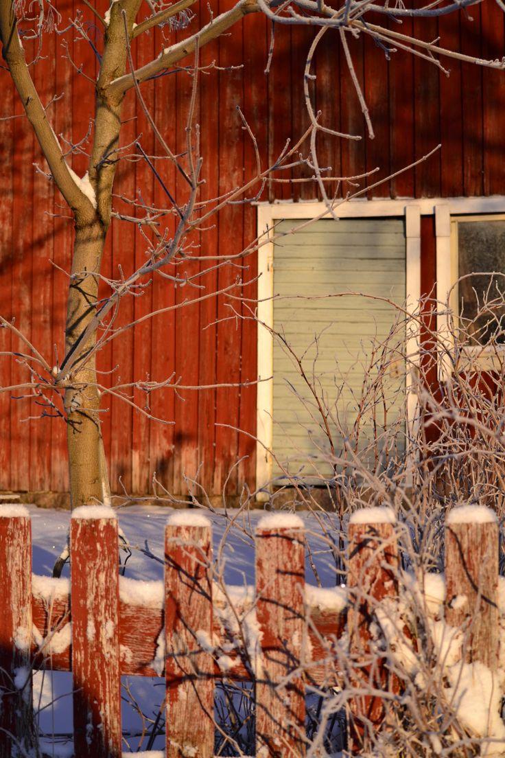 Winter light, Närpes, Finland Photo: Sofia Lindegård