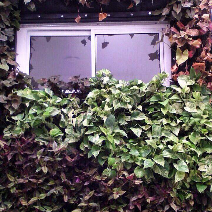 Jardín vertical en ventana