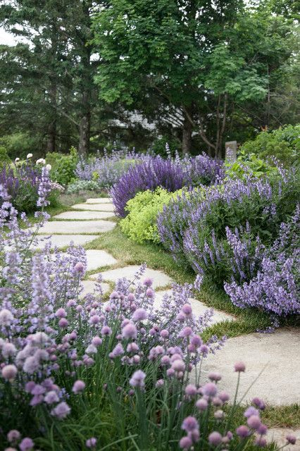 Purple flowers along a walkway